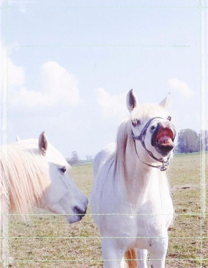 Pferde (klein)